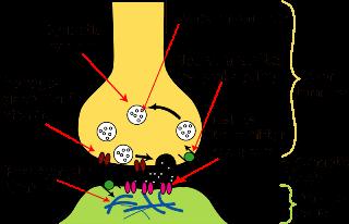 komponen sel saraf